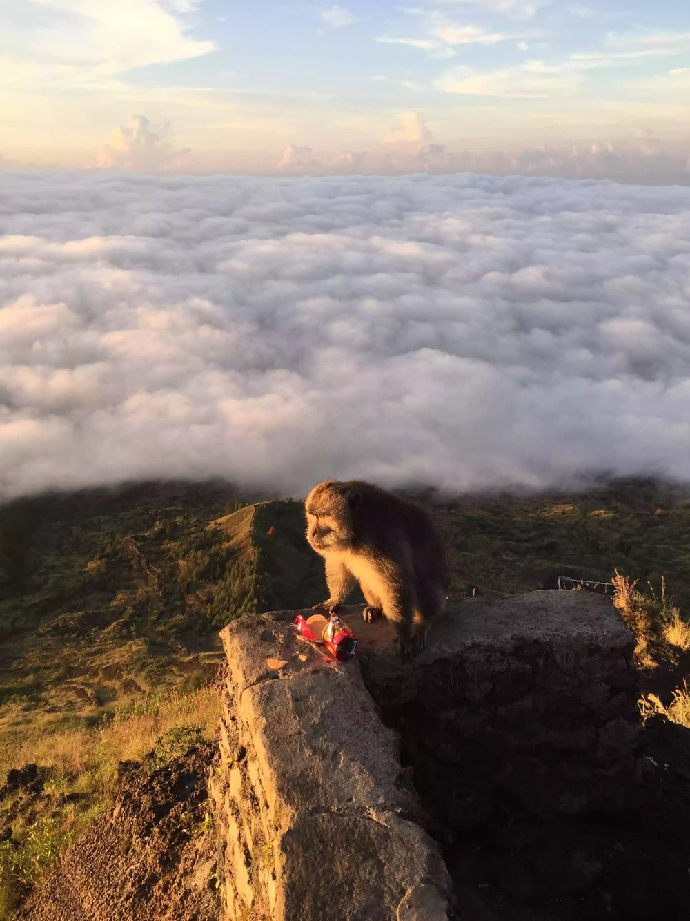 The biscuit thiefs high above the clouds