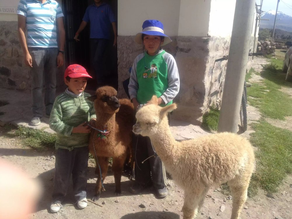 Local boys, with their baby Alpaca's