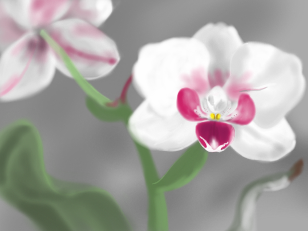 orchid_missEmbe.png