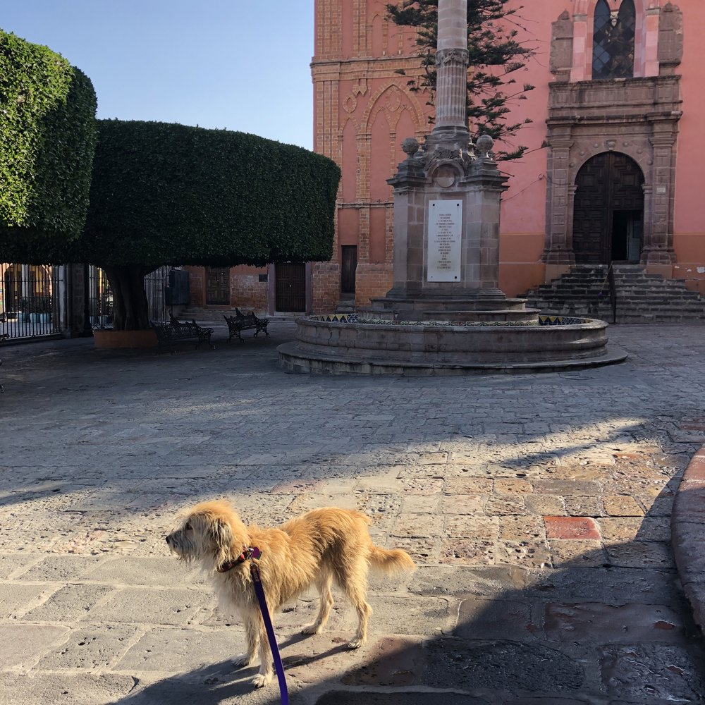 Ancient square, with Edie the terrier on her morning walk