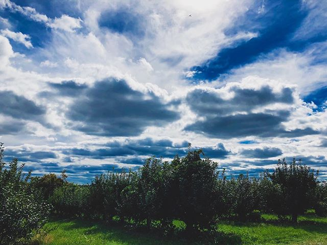 It was the perfect weather this weekend for the apple orchard ⛅️