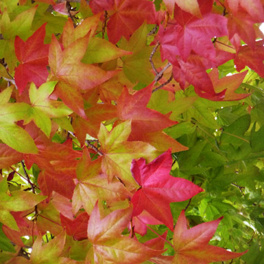 Changing_Leaves_cluster.jpg