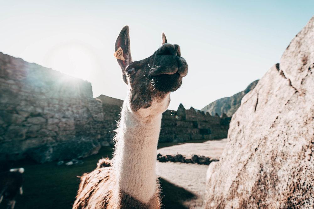 Peru edited-07016.jpg