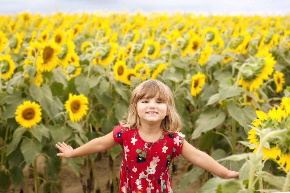 FlyingthrusunflowersflatMF.jpg