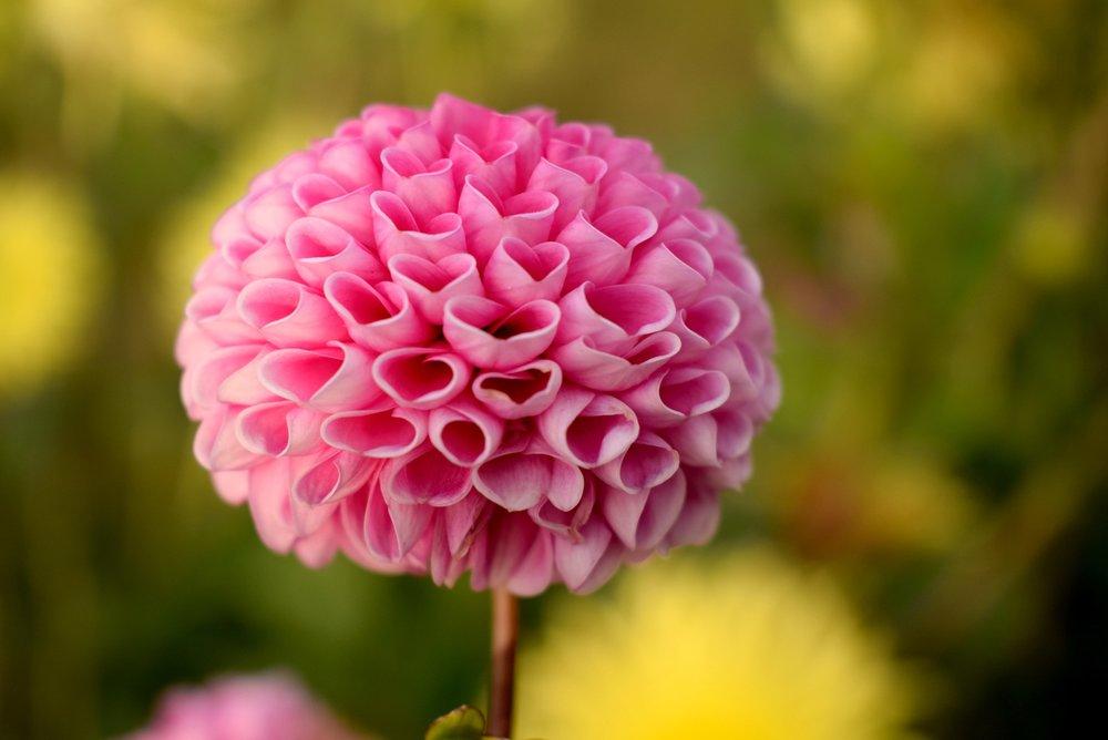 beautiful-bloom-blooming-369433.jpg