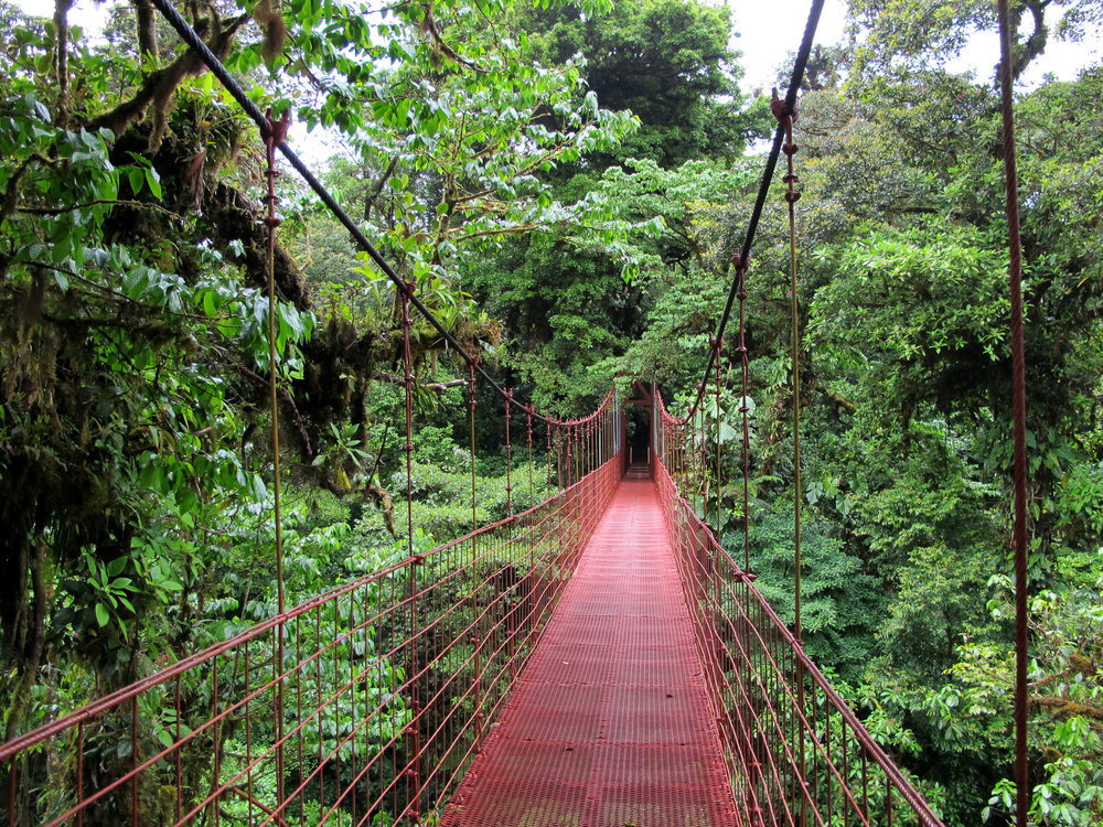 A bridge in Monteverde Cloud Forest. By Haakon S. Krohn [CC BY-SA 3.0  (https://creativecommons.org/licenses/by-sa/3.0)], from Wikimedia Commons