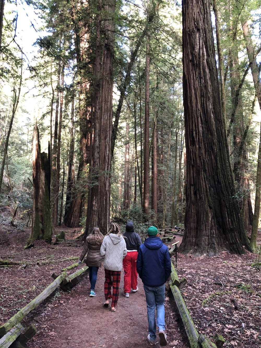A hike in the redwoods with Joseph's siblings and brother in law