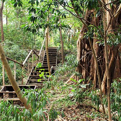 Eden-Hope-Vanuatu-Pathways.jpg