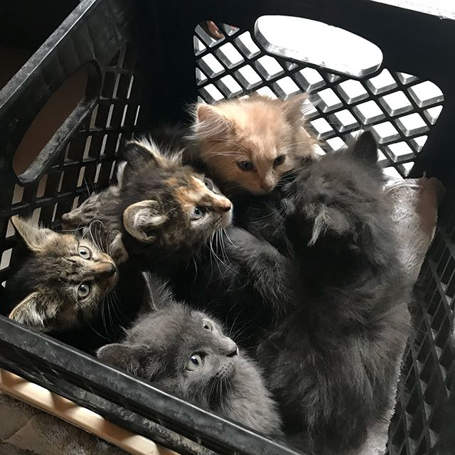 7 free kittens!!! Does anyone in SLC need one?? Let me know this weekend before my neighbor takes them to the humane society.