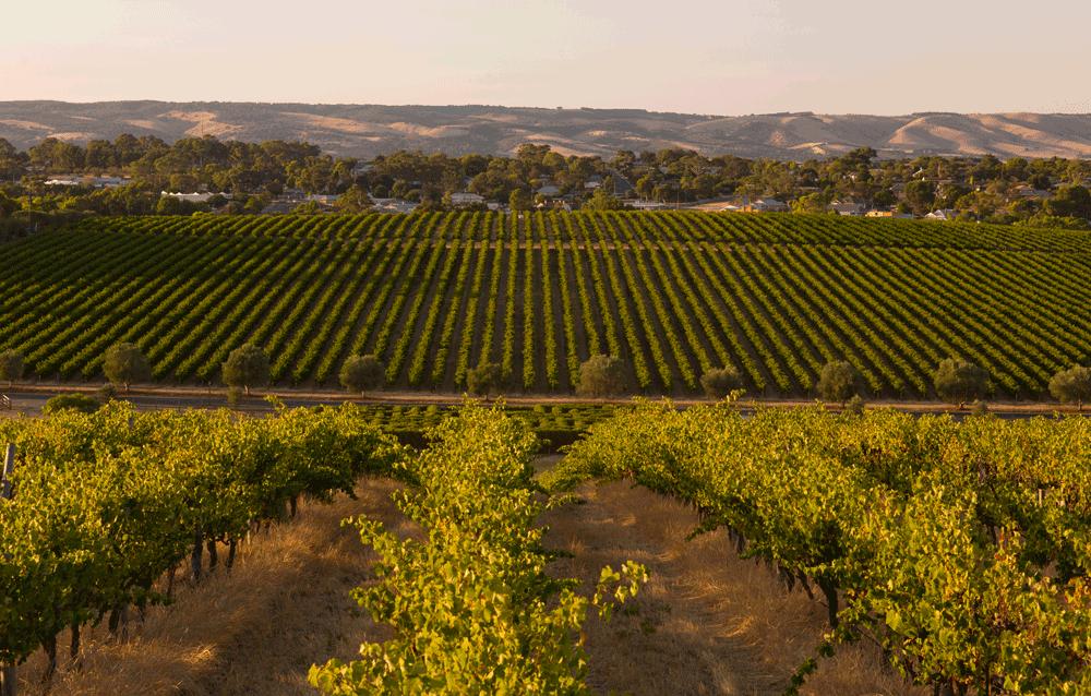 The Maxwell Wines Vineyard. Image via Maxwell Wines Website.
