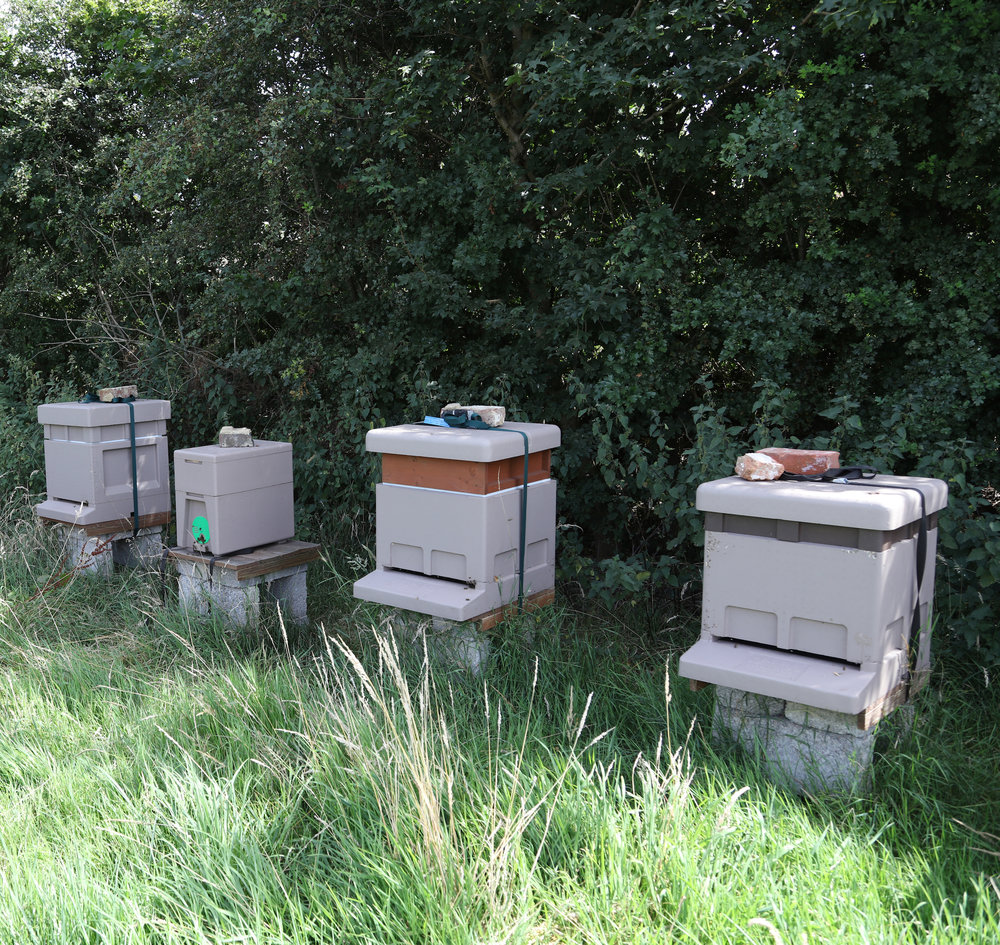 sinah common honey apiaries