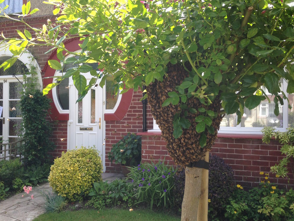 Help I have a bee swarm