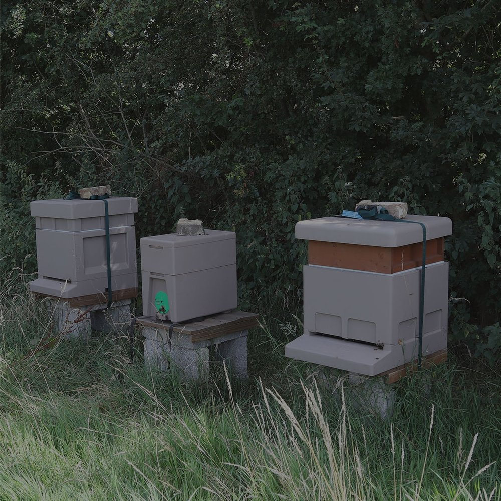 Our Apiaries -