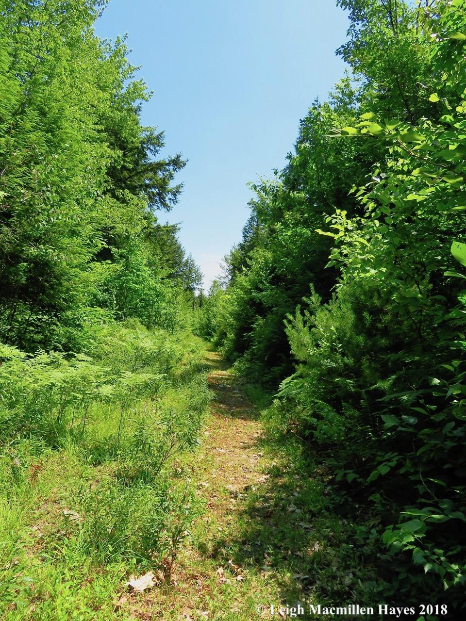 j3a-the-trail-mowed.jpg