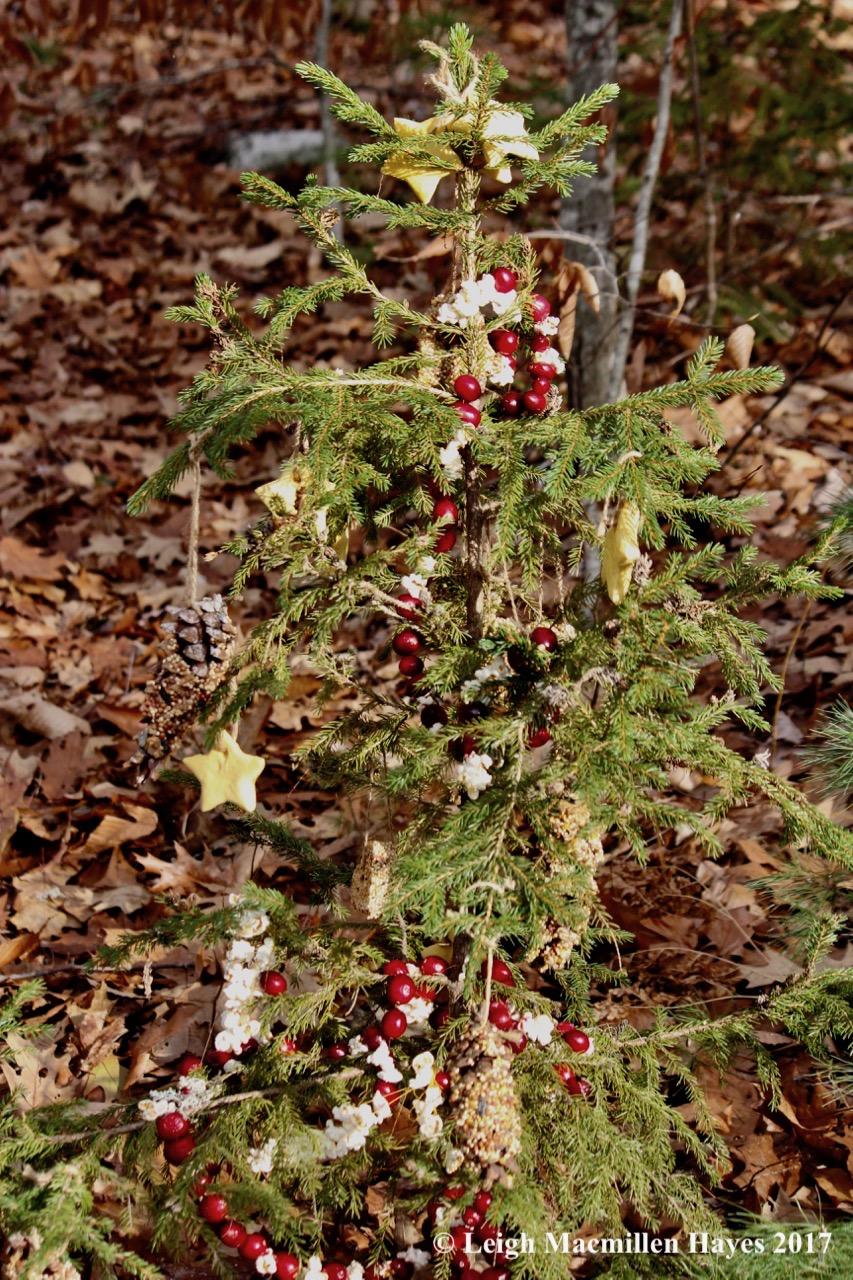 f-christmas-tree.jpg