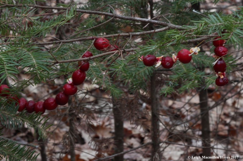 f-cranberries.jpg