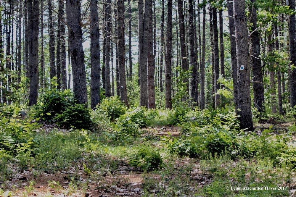 l-pine-grove-1.jpg