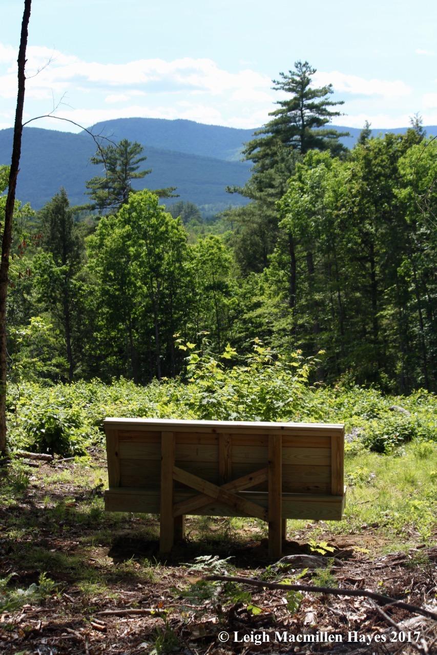 l-bench-view.jpg