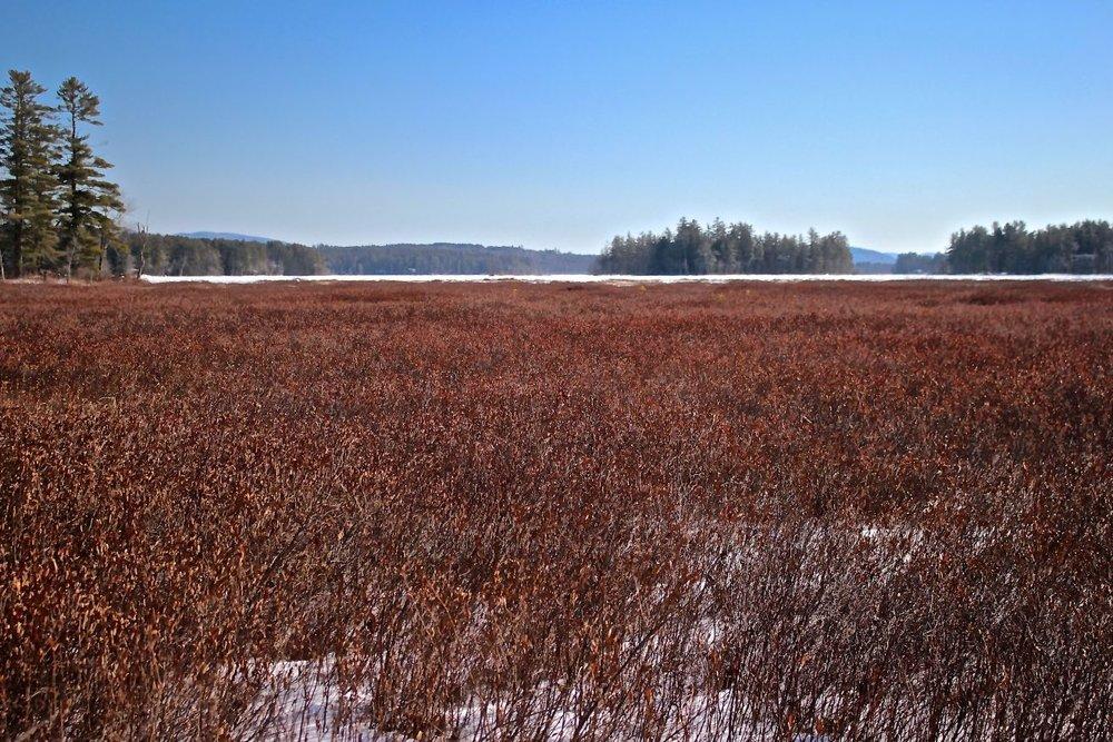 sb-near-outlet-leatherleaf-fields-forever.jpg