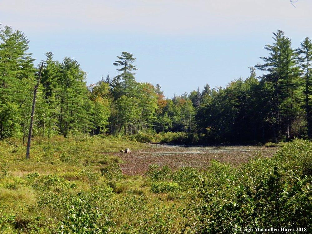 14-moose-pond-bog.jpg