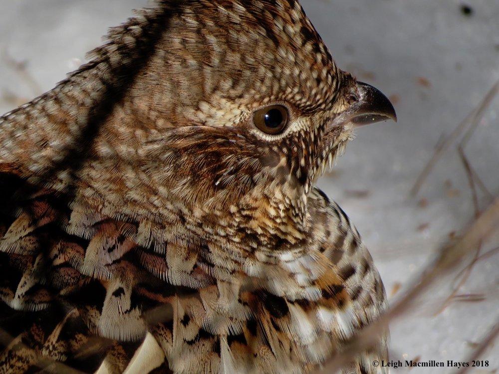 7-profile-feathers-overlap.jpg