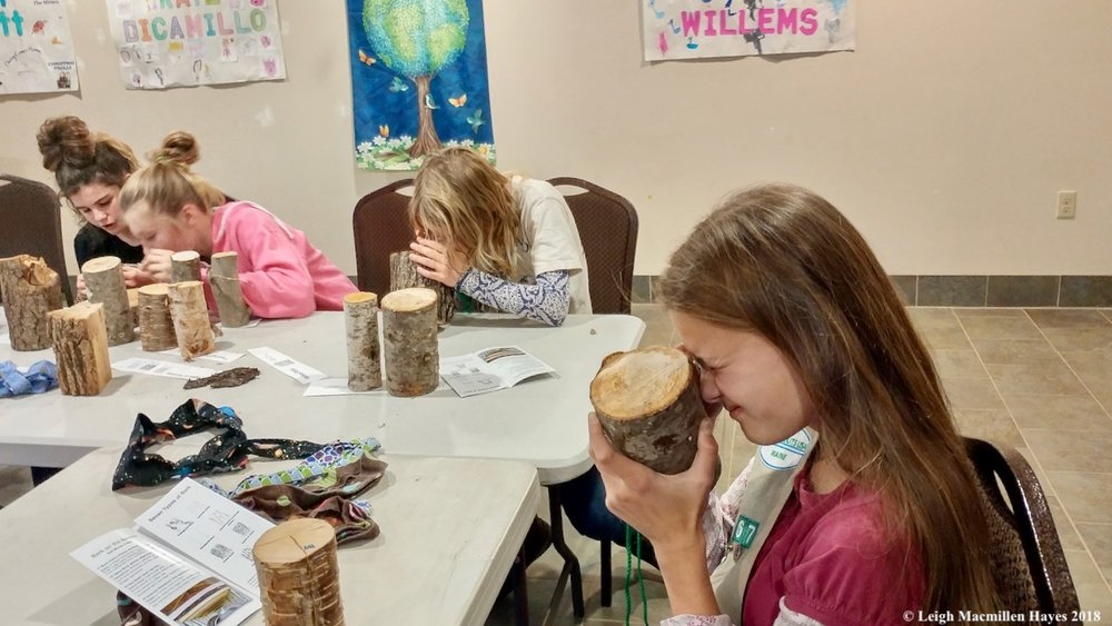 Lovell Girl Scout Cadette Troop 67 up close and personal with tree cookies