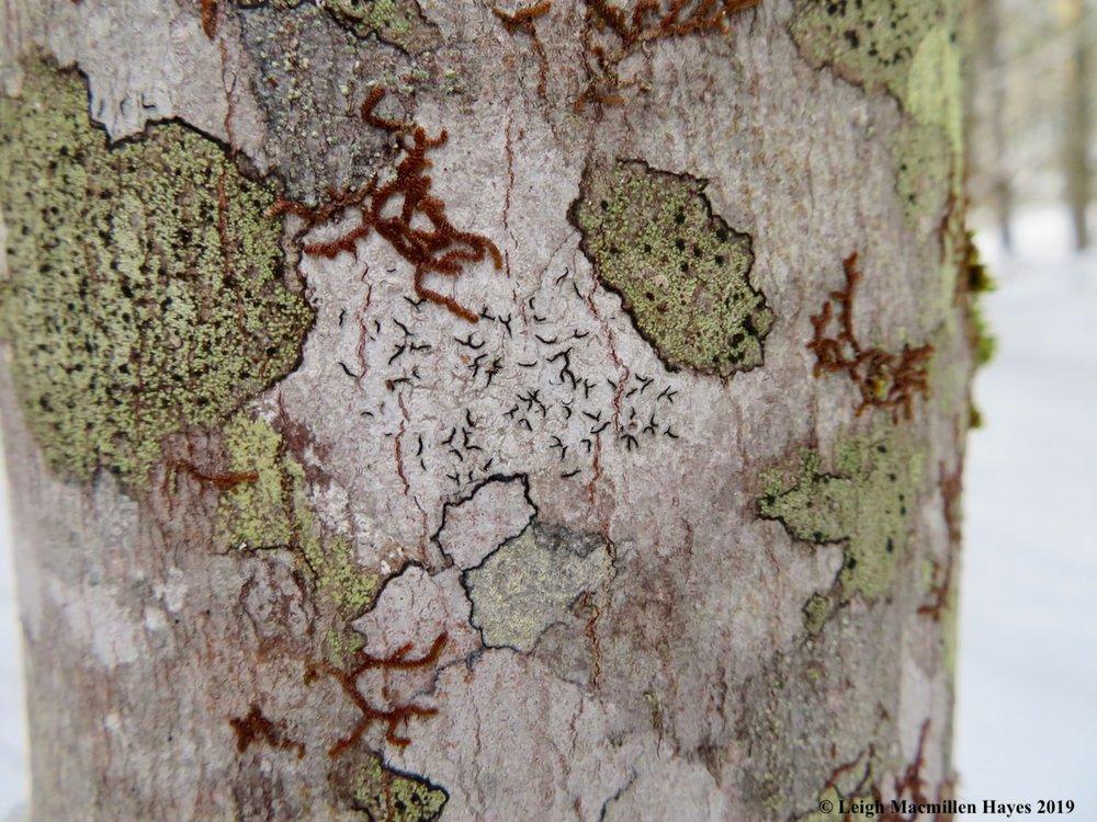 7-looking-at-bark-lichens-and-liverworts.jpg