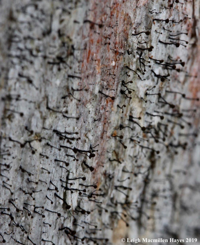 10-sporangia-atop-short-stalks.jpg