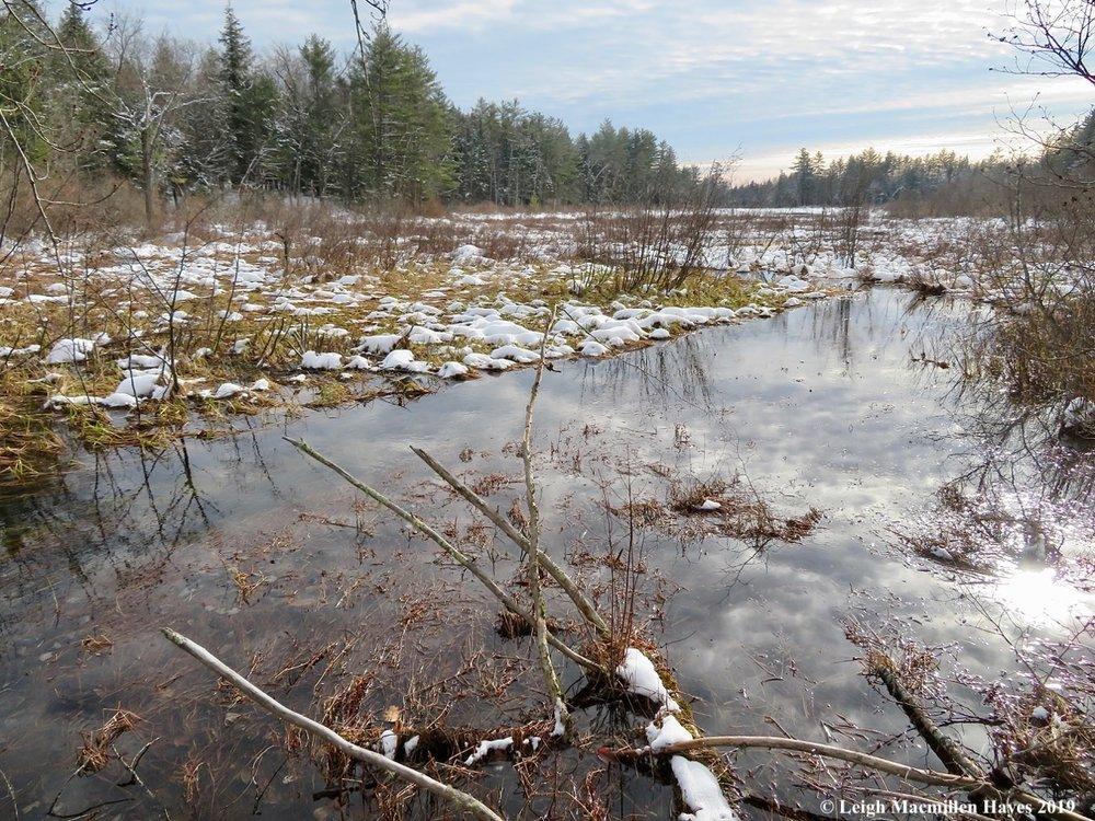 16-sucker-brook-to-moose-pond-bog.jpg