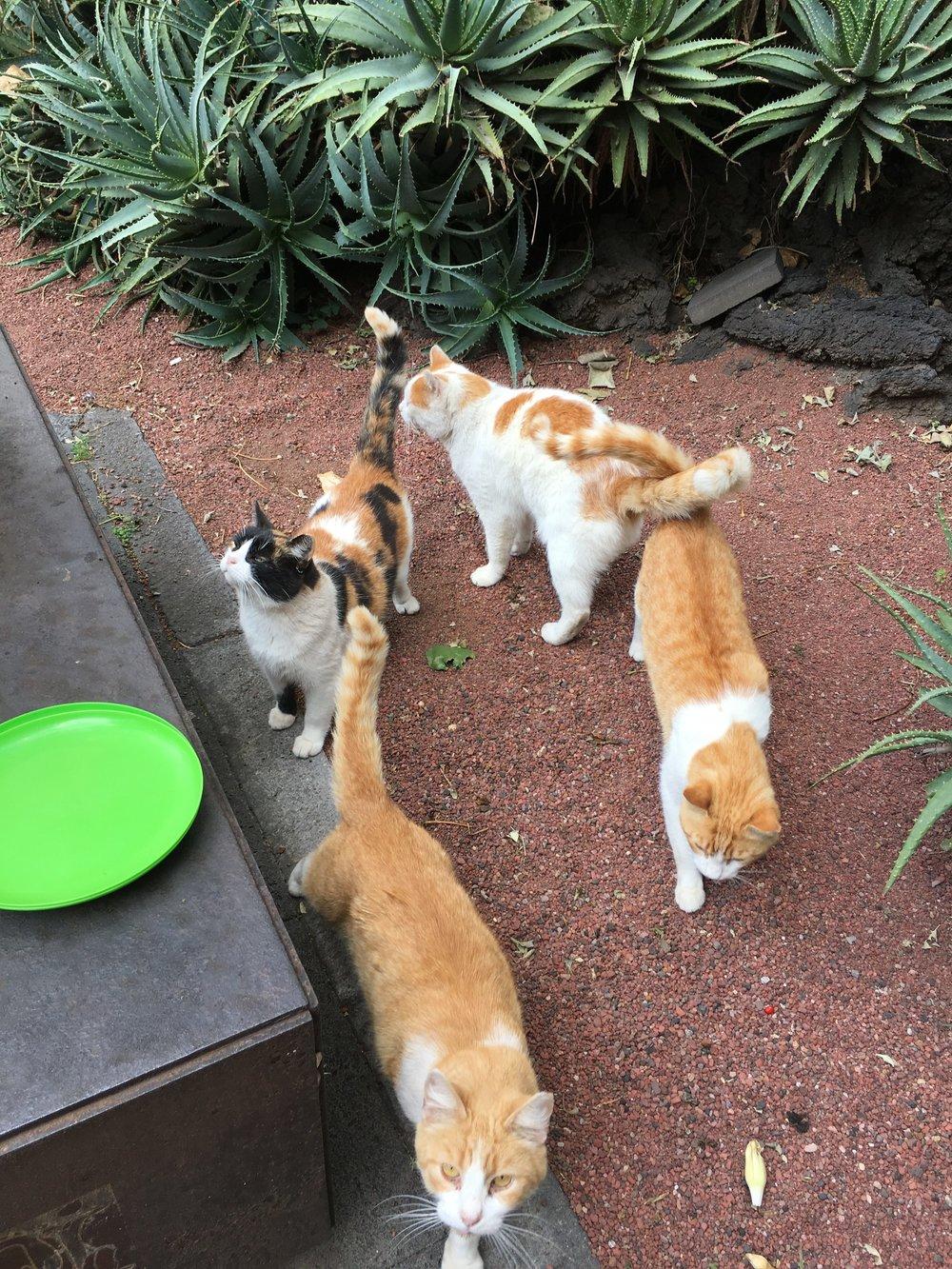 Some of the cats at the Palacio Nacional
