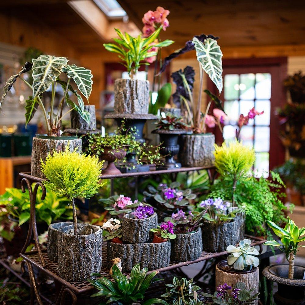 House plants -