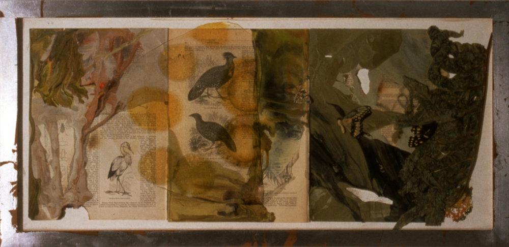 Aves, 2000