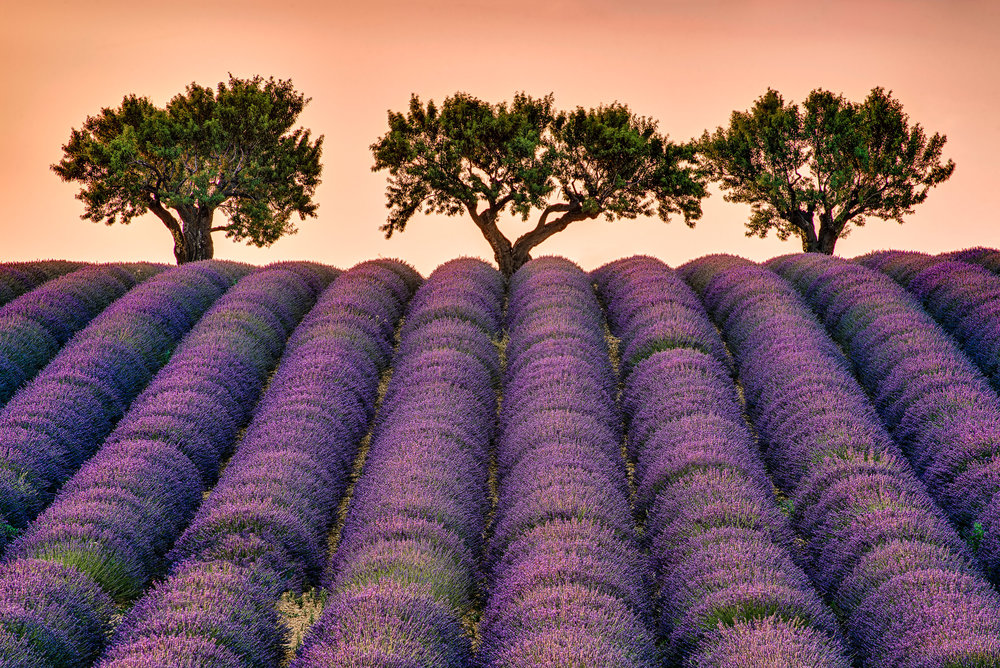 Day 6 - In the morning, we will capture another sunrise in the lavender fields, and then we'll be off for a last delicious breakfast in Provence. We will bring you back to Nice Airport at around 13:00.