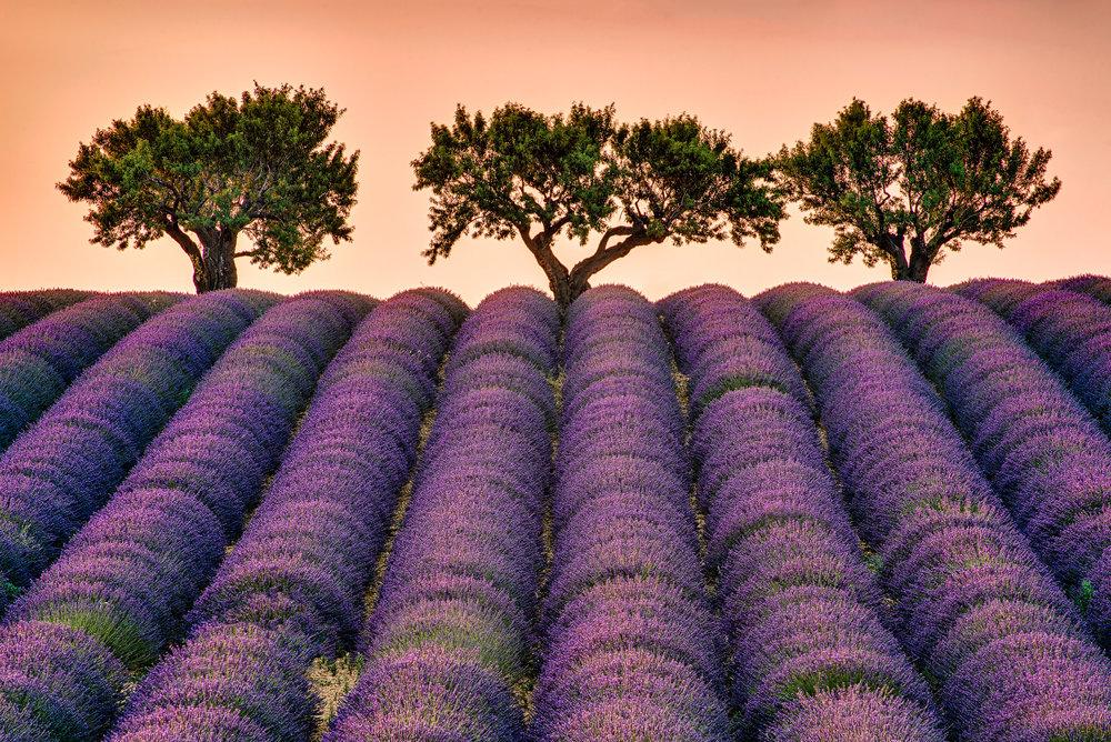 Provence 003-Luminar Edit.jpg