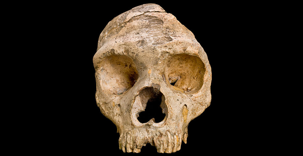 gibraltar1-neanderthal-skull-front-on-black-hero.jpg