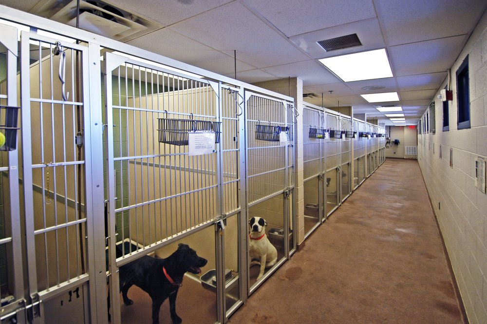 Indoor Dog Kennels 2.JPG