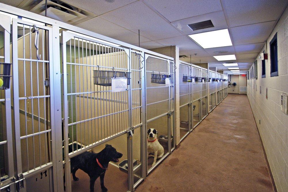 Indoor Dog Kennels 2.JPG