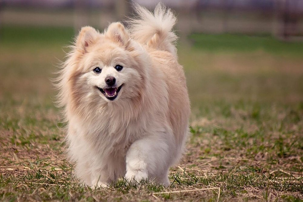 Dog food commercials focus on happy dogs and owners (benefits) rather than the ingredients (features).
