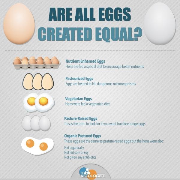 Different Egg Types.jpg