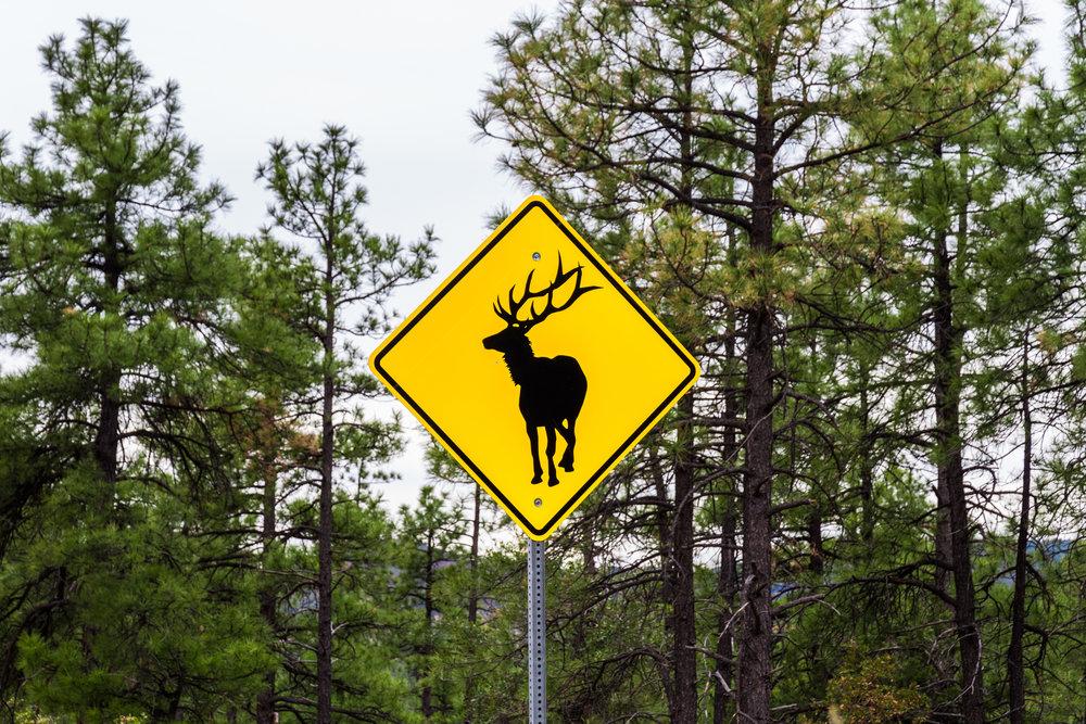 Elk Sign.jpg