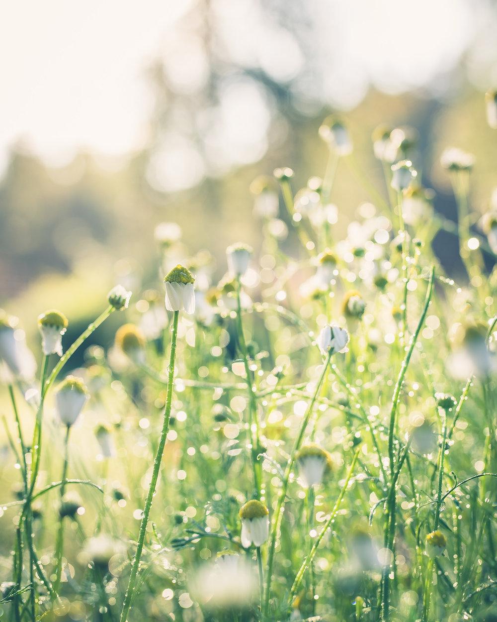 blommor-.jpg