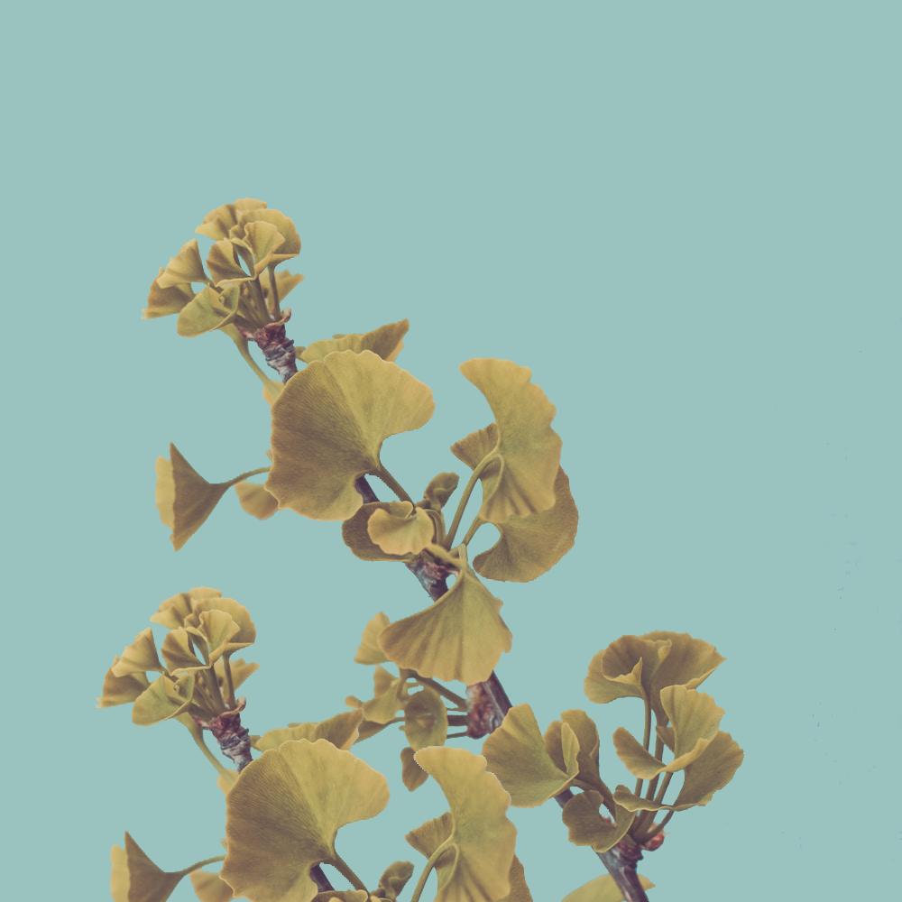 river-oaks-aromatherapy.png