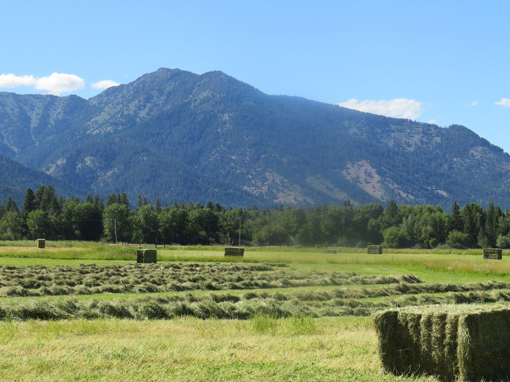 July - Making hay while the sun shines