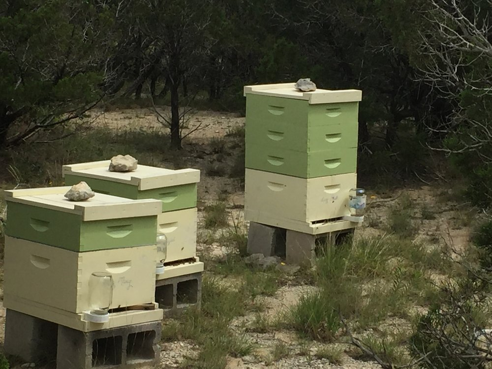 bee hives for website.JPG