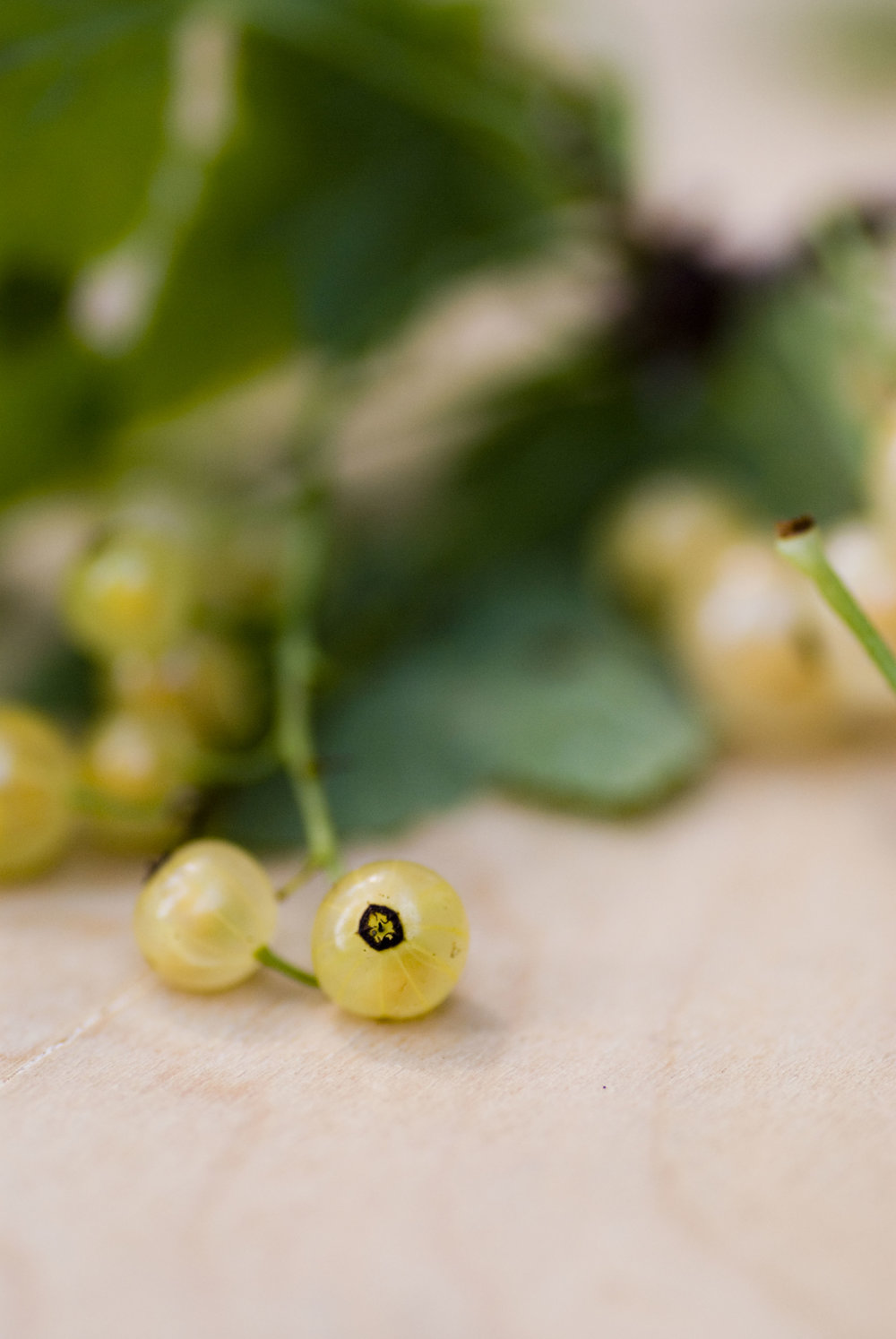 whitecurrants_3.jpg