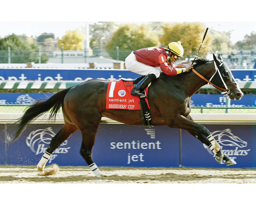 Big Drama won the Breeders' Cup Sprint 2 1/2-lengths ahead of the field in :56.42.