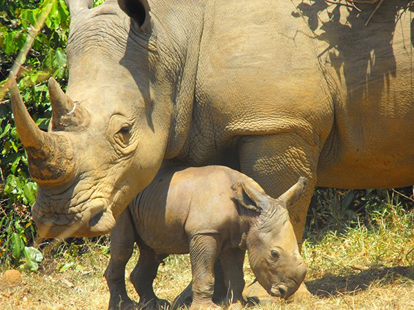 ZIWA Rhino Sanctuary Trust Uganda - We sponsor a baby rhino at the ZIWA Rhino Sanctuary in Uganda and even went there ourselves to teach locals how to make their own natural beauty products.