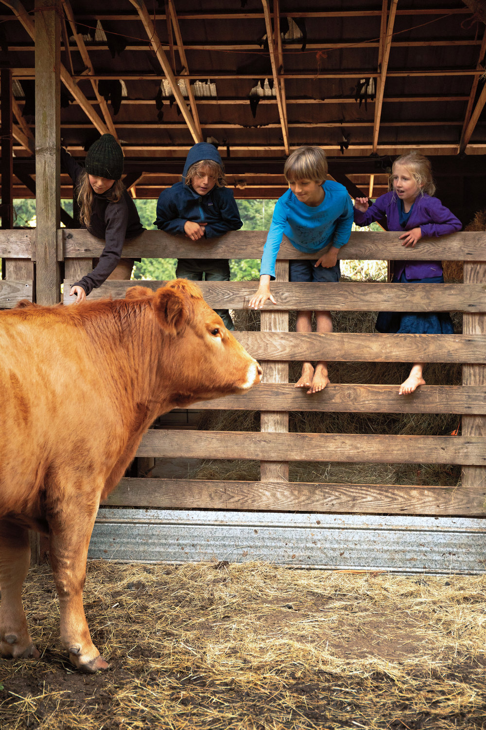 Kids and cows.