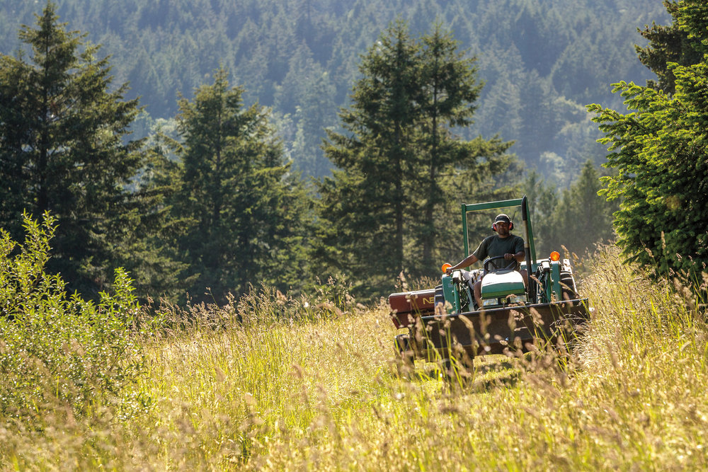 Josh making the magic happen and cutting the year's hay.