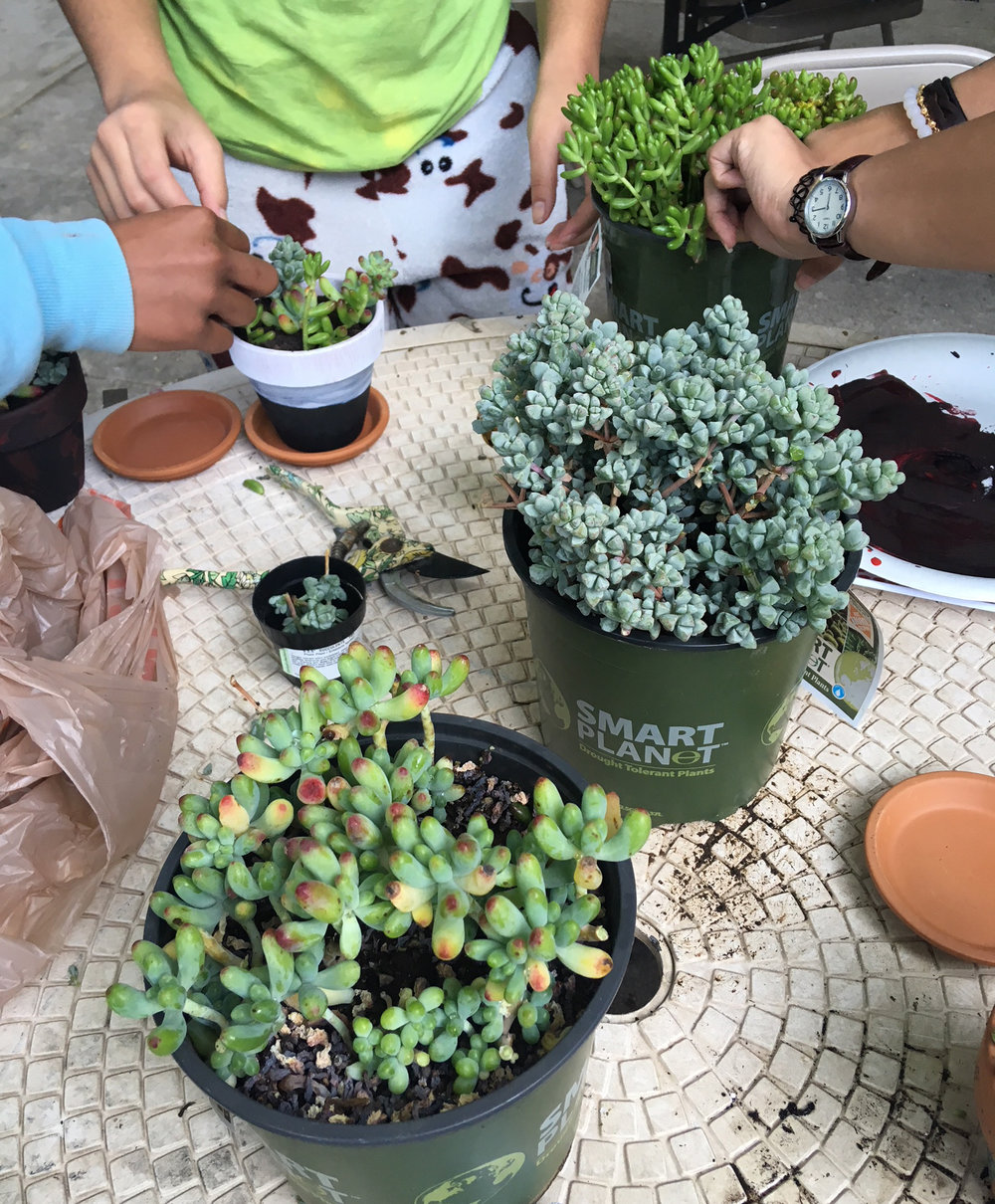 2018-TLP Youth Planting Project.JPG